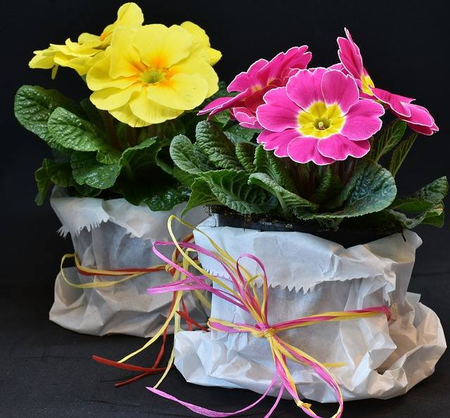 Crafty Gift Ideas for Mother's Day, primroses 3132310 640%, lifestyle%